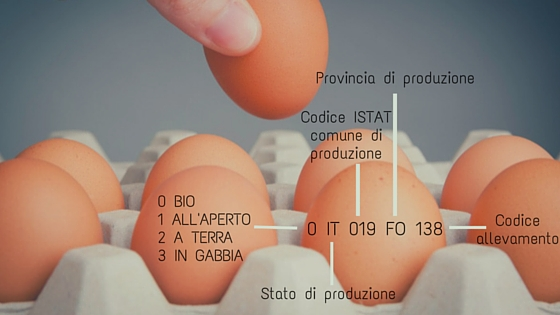 Come si legge un uovo